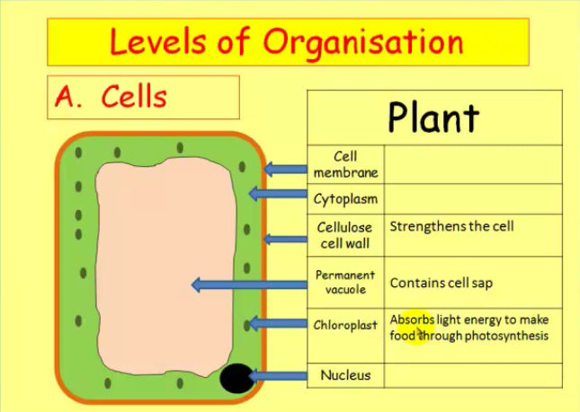 Biology Course Example